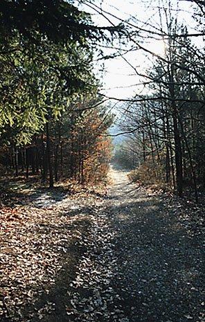 cesta k Babskému potoku
