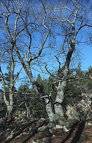stromy v okolí Jezírka
