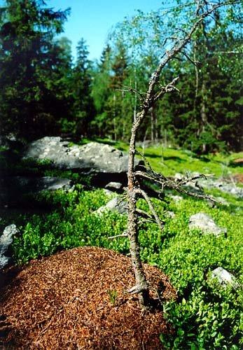 Rezervace Na skalách - mraveniště