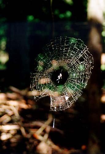Jihobrdský pavouk a jeho zahrádka