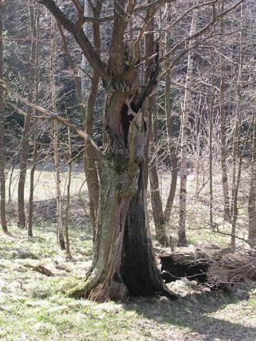 zvláštní strom poblíž rybníka