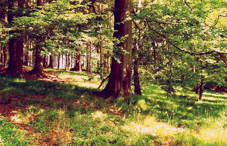lesy ukrývají mnohá tajemství