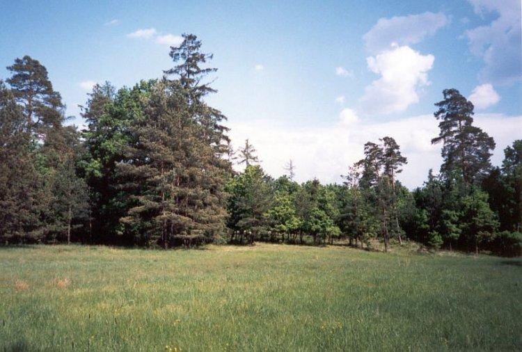 jedna z lesních luk