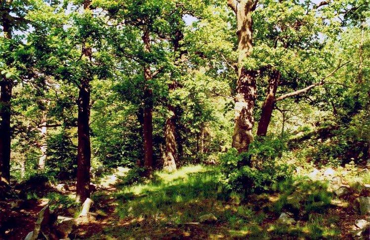 divoký les