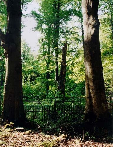 Les na Nahořově