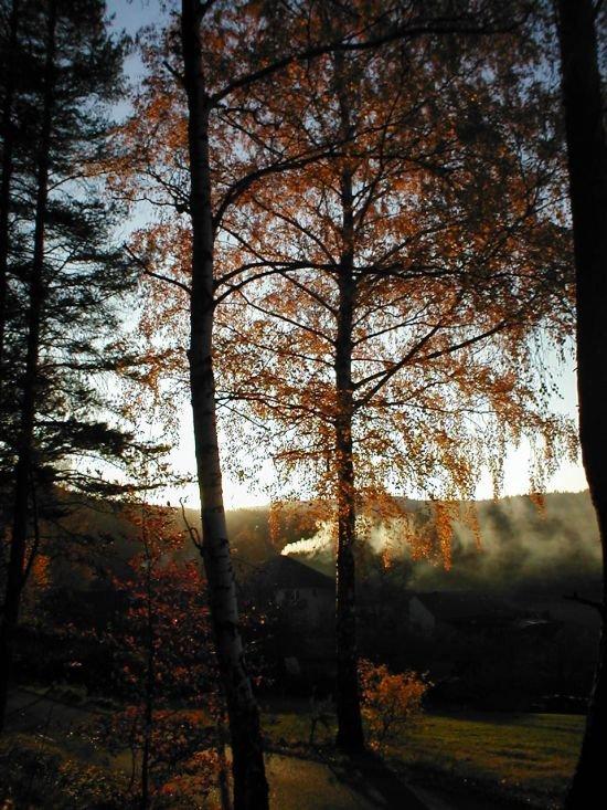 z okraje lesa