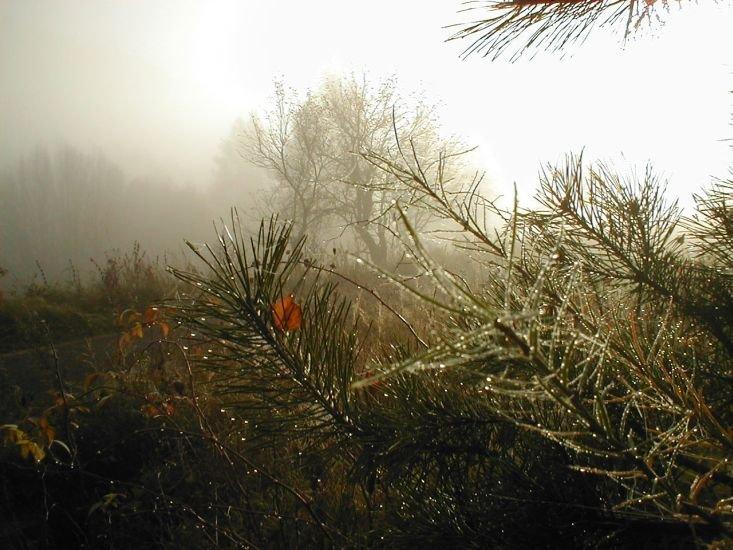 vláha z mlhy