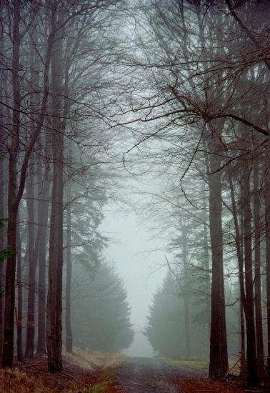 klasická brdská cesta