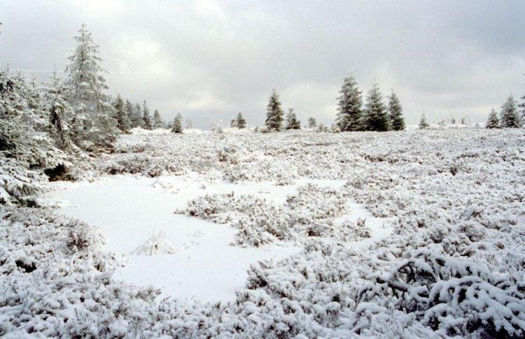 zimní vřesoviště