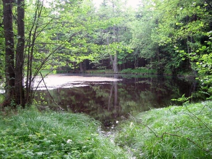 lesní oáza