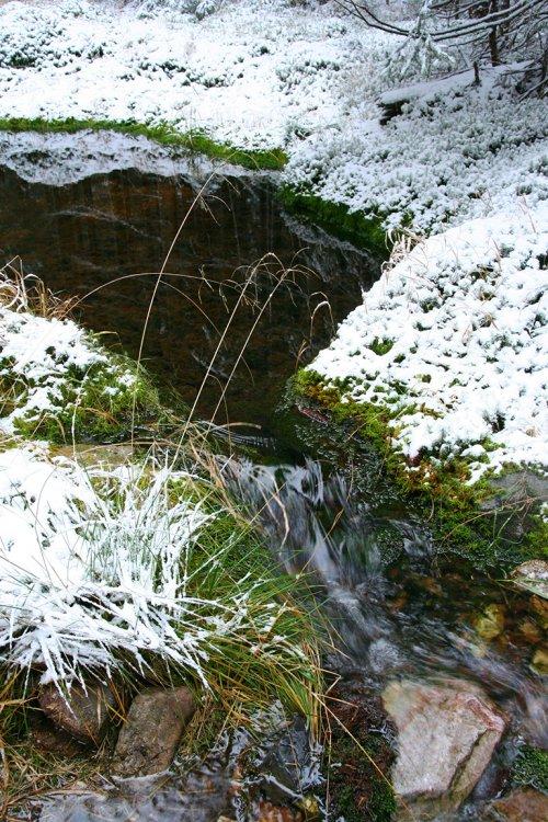 sněhová a rašeliníková tůňka