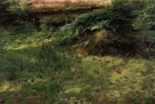 rašelinky