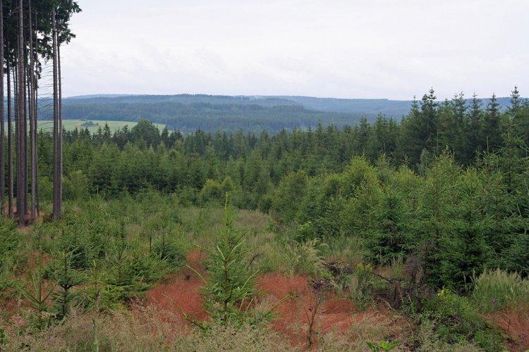 Pohled do údolí Litavky