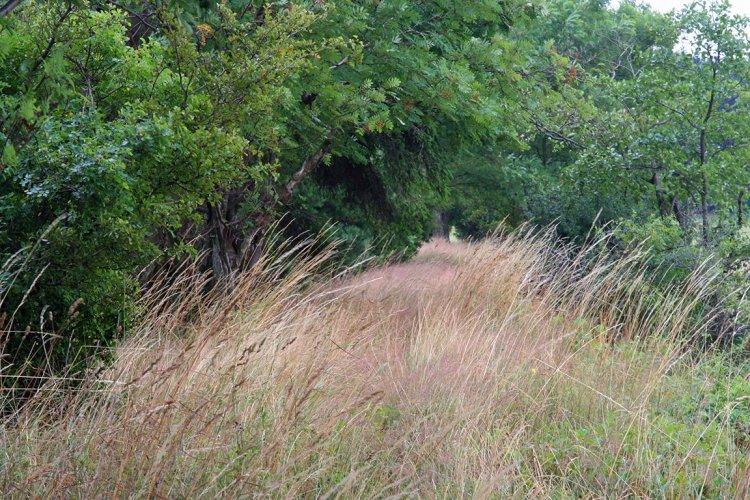 V polích pod Lázem