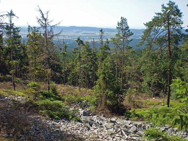 živořící les na Praze