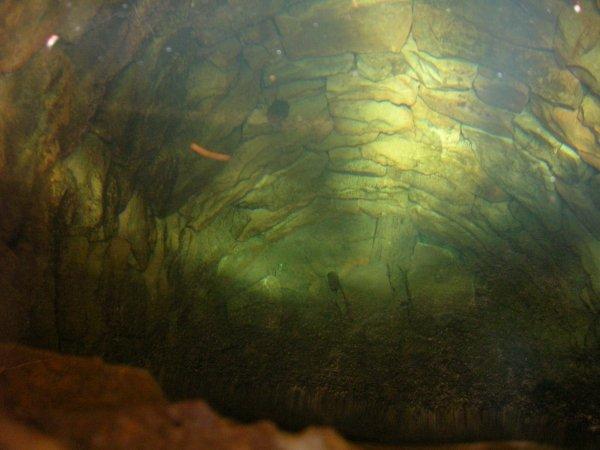 kopaná lesní studna u Plešivce