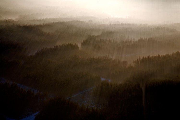 moře lesů