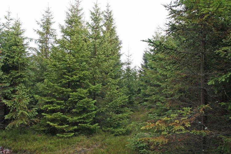 V tomto typu lesa se pátrá nelehko....