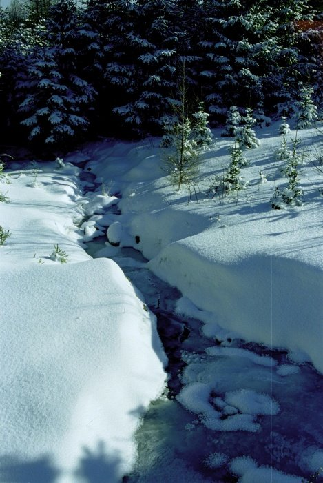 potok ve sněhovém sevření