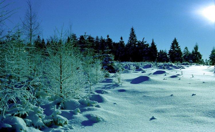 panenský sníh