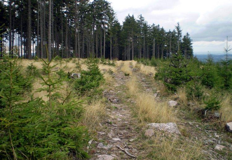 Brdce - cesta poblíž vrcholu