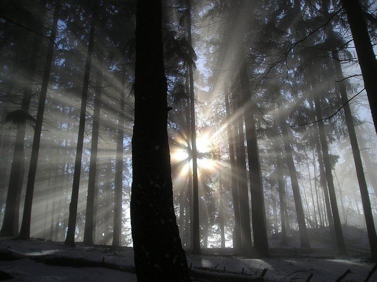 mráz, mlha, slunce a stromy