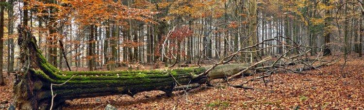 když v Brdech padne strom (Na skalách)