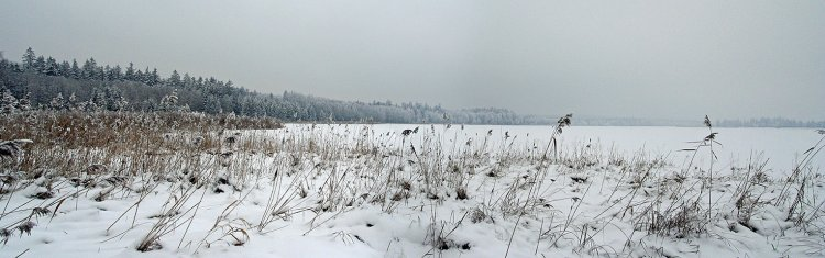 Hořejší Padrťský rybník, pohled od jihu