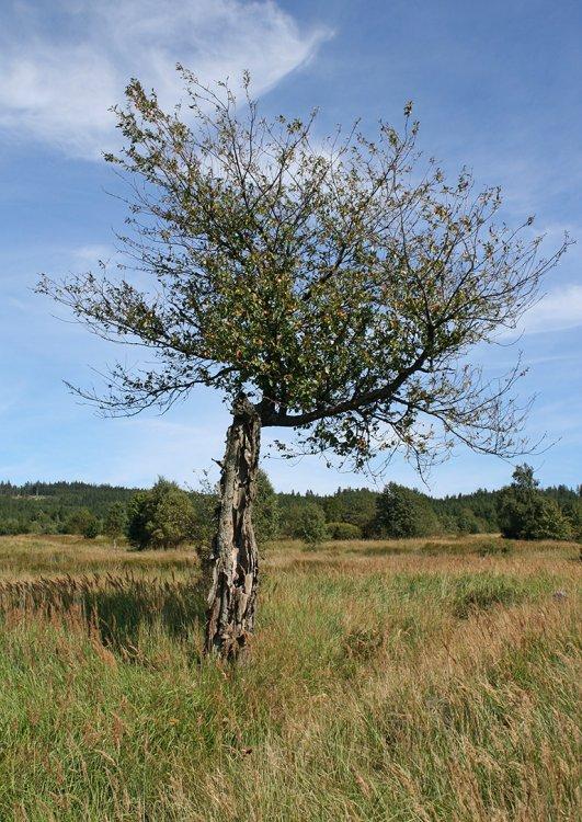 vzpomínání stromů