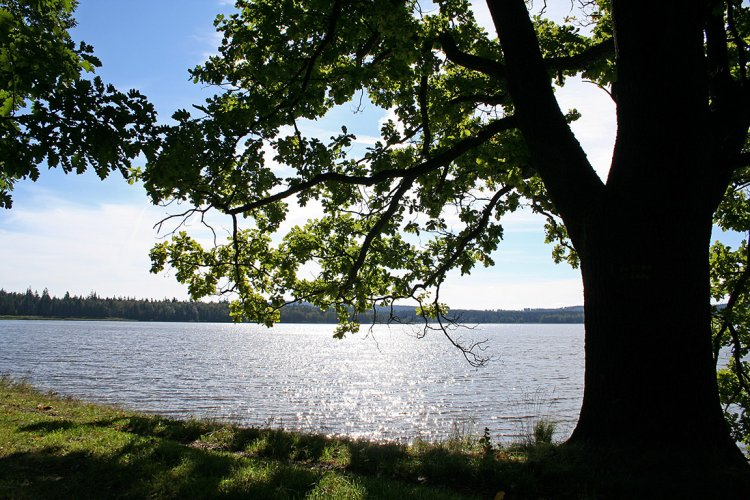 Hořejší rybník před polednem
