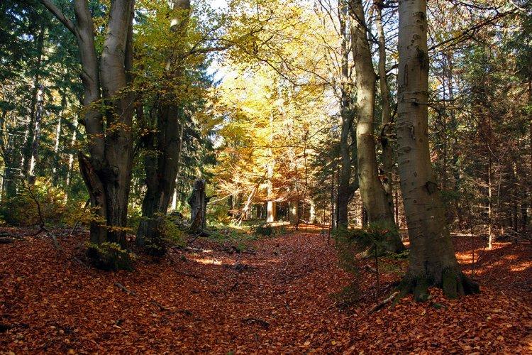 cestu si bere opět les