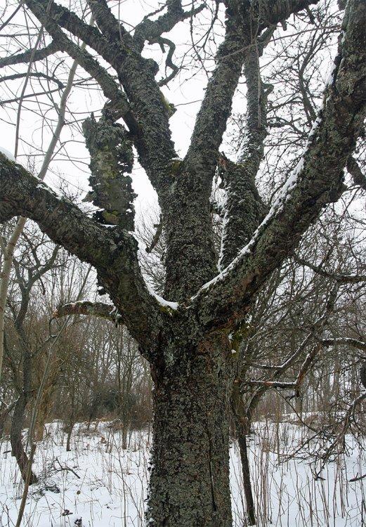 KolBudovy byly zničeny, ale stromy zůstaly