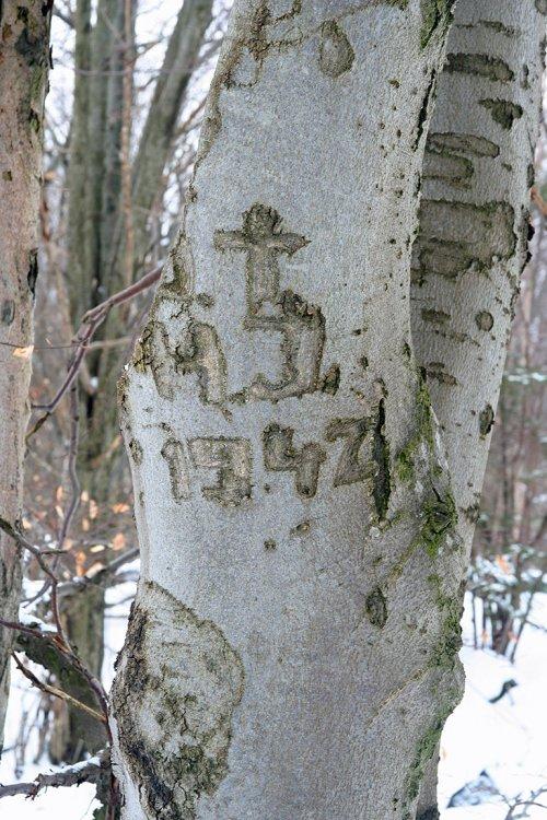 Rytina v kůře stromu těsně pod vrcholem Palcíře