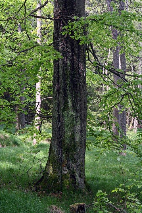 Jarní les u teslínského proboštství