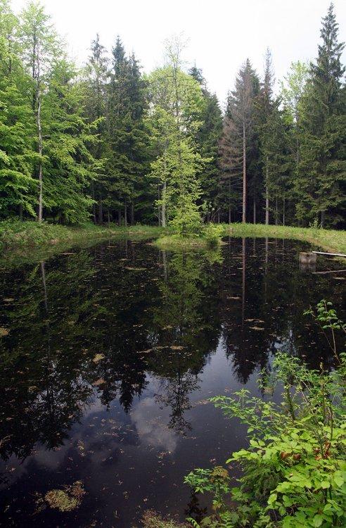 Jeden z obnovených rybníčků u teslínského proboštství