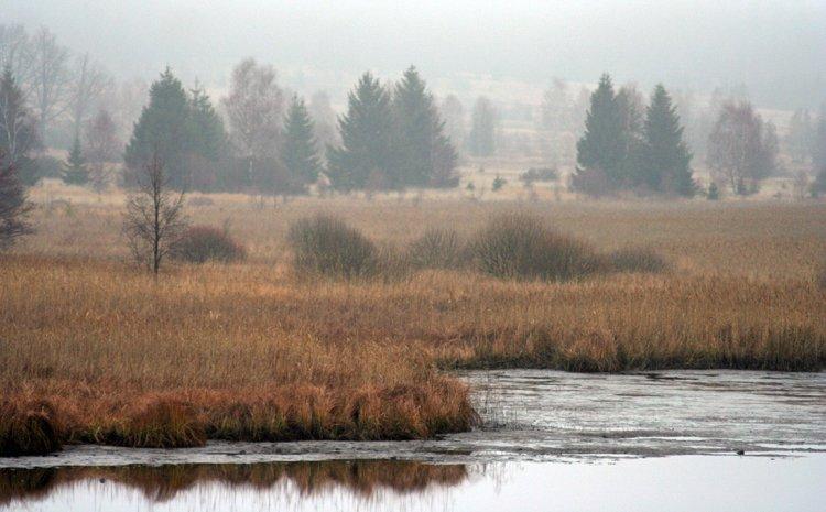 Padrťské pláně v mlze, z hráze Hořejšího P. rybníka