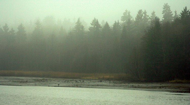 Hořejší P. rybník v mlze