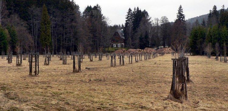 lesní práce u zámečku