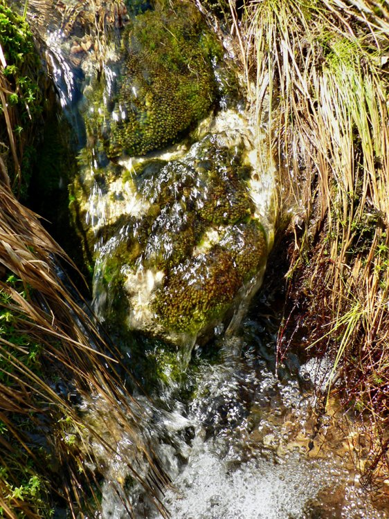 jaro na Mourovém potoce