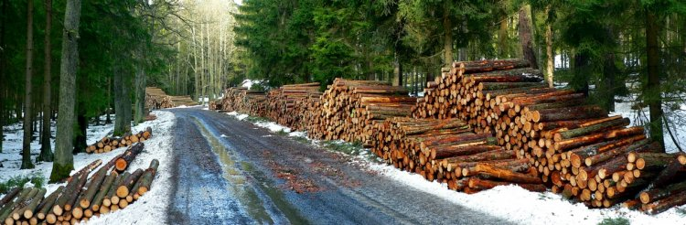 lesní práce pod Beranem