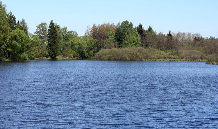 Rybník Tisý