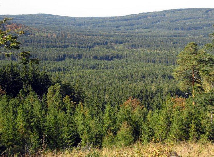 moře lesů z Třemošné