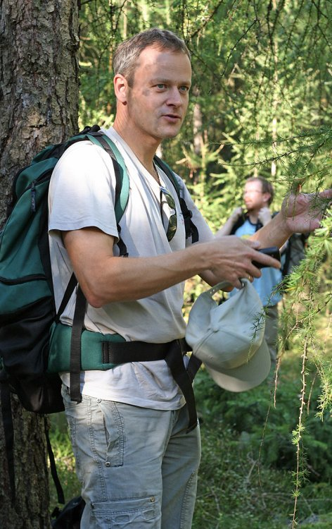 TK v modřínovém lese