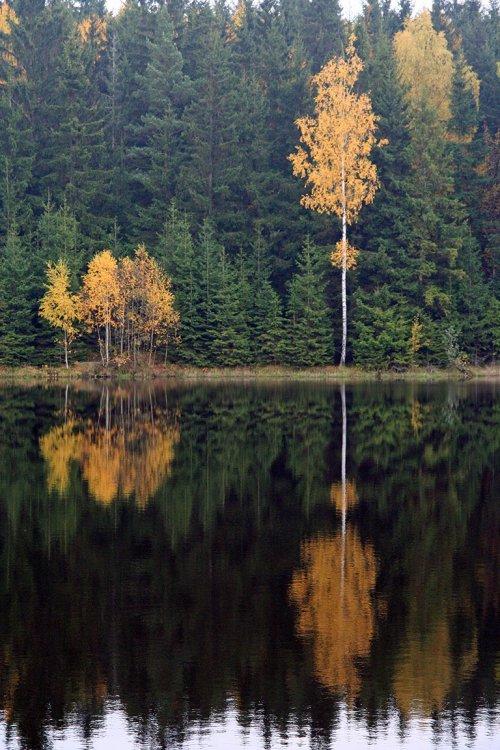 Velký Podvaldecký rybník