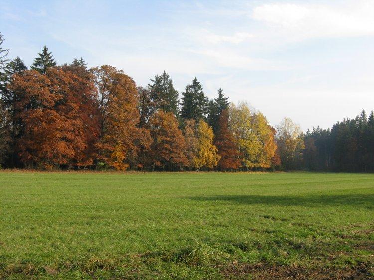 barvy lesů