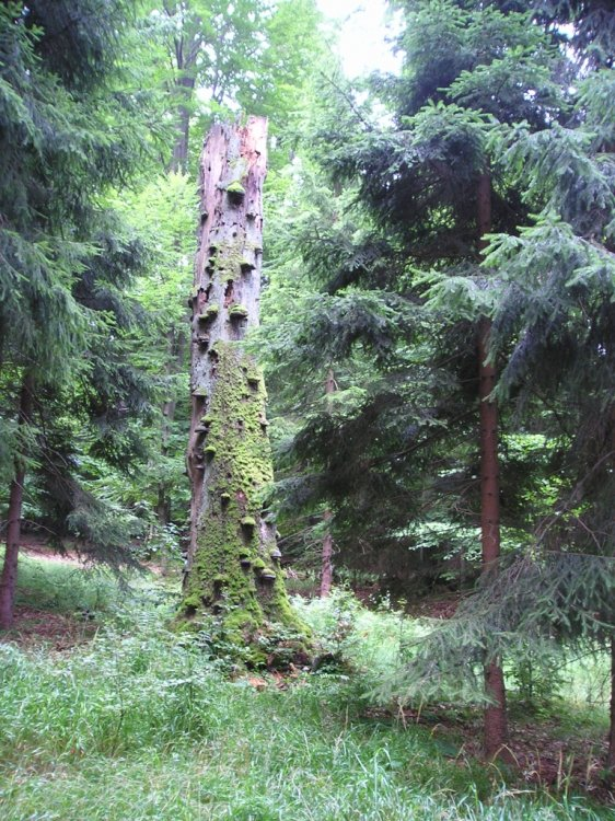 paměť lesa