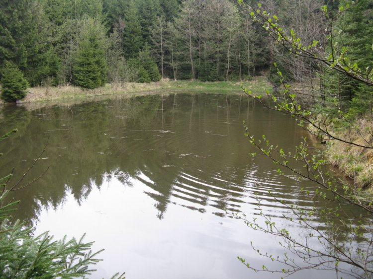 rybníček kdesi v lesích