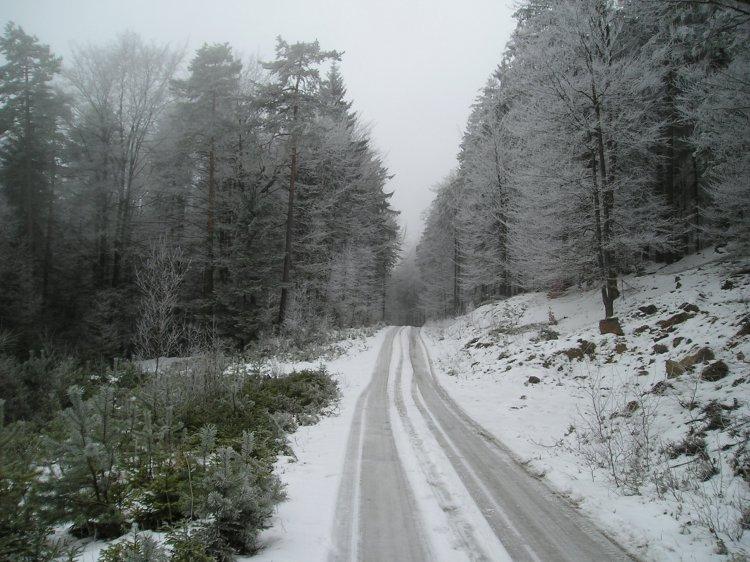 u Varty 2008