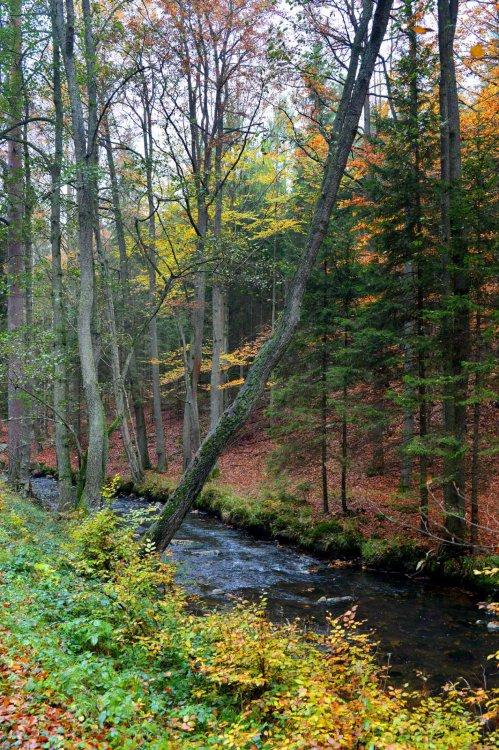 Černý potok v říjnu 2016