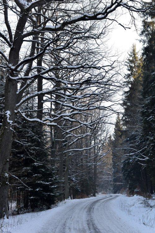 u loveckého zámečku - leden 2017